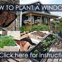 How to Plant Garden Pots and Planter Boxes - Steps / How to plant window box, planter box and all containers with flowers. Step by step instruction with detailed illustrations. Containers, potting mix recipe, watering, fertilizing.