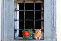 Chat dans la Fenetre