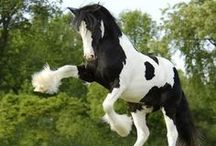 H O R S E S ! / Horses are perhaps the noblest of animals. Their majesty has kept me in awe my entire life. / by DeeDee