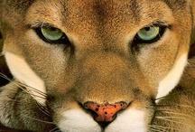 Wild n beautiful