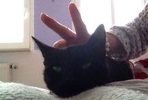"""Milli  =^.^= / """"Katzen erreichen mühelos, was uns Menschen versagt bleibt: durchs Leben zu gehen, ohne Lärm zu machen.""""  Meine liebste Miezi"""