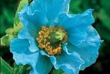 Blue flowers like a tresure ♧