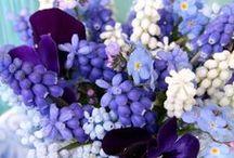 BLOMSTER - Blå blomster