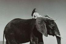 ~ Elephant ~