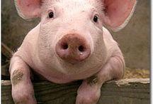 ~ Pig ~