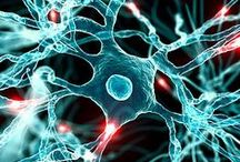- Neuroscience - / by Science-a-Lot