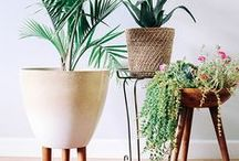 Foliage / Greenery for inside the home, the garden or event decoration