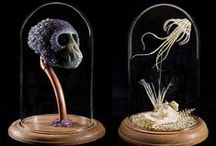 "Wunderkammer / ""Cabinet of Curiosities""... Natural history and the unusual"