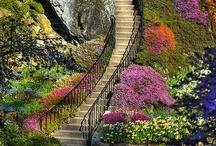Gardens / by Toni