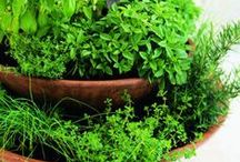 Garden: Tips / Tips, Advice, Good to Know about growing your garden.