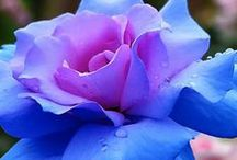 Enchanting Flowers / by Ve Kainama