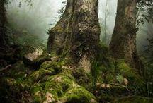 REFS || Nature TREES VINES