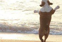 Urlaub mit Hund - Hunde Lodge / Von Hundefans an Hundefans!   Wir lieben Hunde! Daher dreht sich hier alles um den Hund. Spaß mit dem Hund, Reisen mit Hund oder einfach Bilder zu Wegschmelzen oder Schmunzeln.  www.hunde-lodge.de - Deine Ferien mit dem Hund