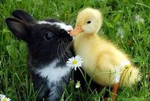 Animal Interspecies Friendships / by CAROL P. COOPER