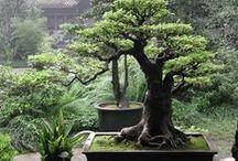 Wonderous World of Plants / The Wonderous World of Plants including mushrooms or fungi xx