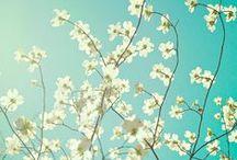 Shop4 Hoesjes | Bloemenhoesjes / Inspirerende bloemenhoesjes voor de nieuwste smartphone's.