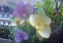Papier Orchidee/Paper Orchid / Habe ich gesehen diese Orchidee aus Papier und wollte sie auch basteln für einem Geburtstag  das ist draus geworden.... in Gelb und rosa