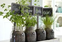 Herbs & vegetables / Dyrk i vinduskarmen