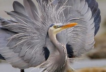 Beautiful Animals / Animals, Birds, Fish & Reptiles  / by Karen Harrison