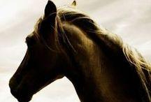 Love for horses