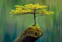 voda / úžasná příroda