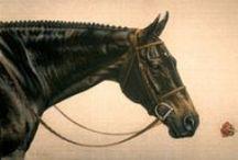 Horse illustarations