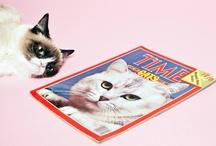 Gato / Pasión por los Gatos! / by Cristina Serrano