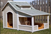 Pet-Friendly Homes