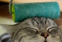 LOLcats / La samedi tout est permis. Mais le samedi c'est surtout le #caturday sur les réseaux sociaux. Le jour où les LOLcats prennent le pouvoir !