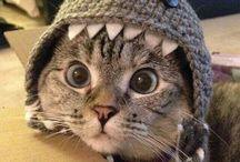 Costumes de chats / Soirée déguisée ? Pas de pb ! Votre petit chat peut aussi en profiter pour se fondre dans le décor :)