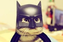 Cat Vador / Chat va faire mal...