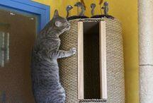 Arbres à chats / Au secours, mon chat grimpe sur les murs ! :)