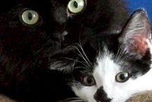 Shorty & Kodi / 2 amis inséparables qui font le buzz sur la toile !