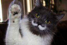 Grosses moustaches / Le mercredi c'est le jour des #WhiskersWednesday / le jour de la moustache sur Instagram