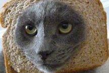 Breading cats / Drôle d'affaire ce chat pain de Noël...