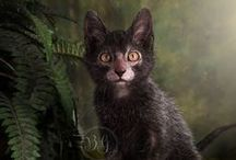 Lykoi Chat-garou / Si vous aimez les créatures fantastiques, vous tomberez certainement amoureux de cette petite boule de poils.