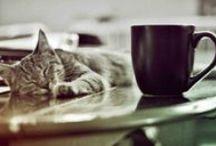 Bar à chats / Un bar à chats ou café à chats ou encore Neko Café (Neko signifiant « chat » en japonais) est un bar ou un café ayant pour particularité d'héberger un grand nombre de chats avec lesquels les clients peuvent interagir. Ce bar à thème est un concept populaire au Japon.