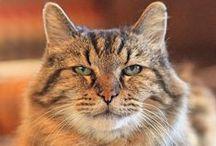 Corduroy the oldest cat / Le plus vieux chat du monde : 26 ans !!!