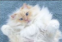 Sky, chat-nuage / Chat dodu, chat poilu !