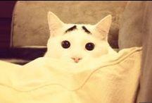 Sam le chat / La nouvelle star féline du Web s'appelle Sam... et sa gloire vient de ses sourcils :)