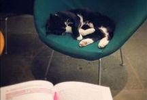The Library Cat / Jordan, le chat vedette de la bibliothèque centrale d'Édimbourg.
