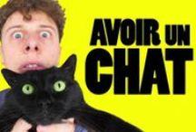 Sergi, chat de Norman / Norman aime son chat. Son chat a donc des vidéos à lui.