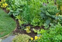Edible Landscaping / http://camastergardeners.ucanr.edu/