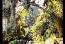 California Botanical Gardens & Arboretums