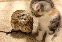 Kociaki / zwierzątka