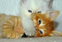 Cute animals / by Abigail