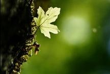 ★ Green hope ★
