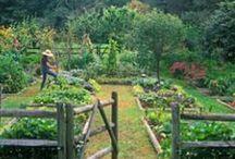 The Free Folk Farm / Homesteading