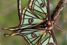 butterflies and dragonflies ♥