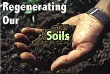 Organic Transitions / To survive and thrive in turbulent times we will need to organize ourselves at the grassroots level to carry out a series of Organic Transitions - not only in terms of food and farming, but also in transportation, housing, health, and education.